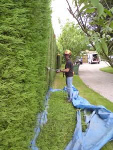 Hedgecutting 2